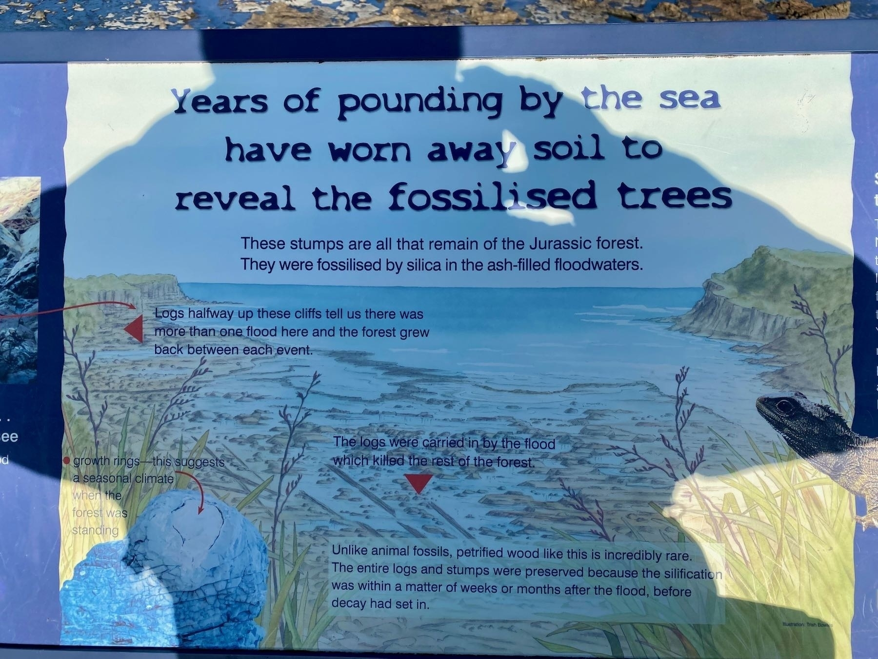 Information sign about the forest.