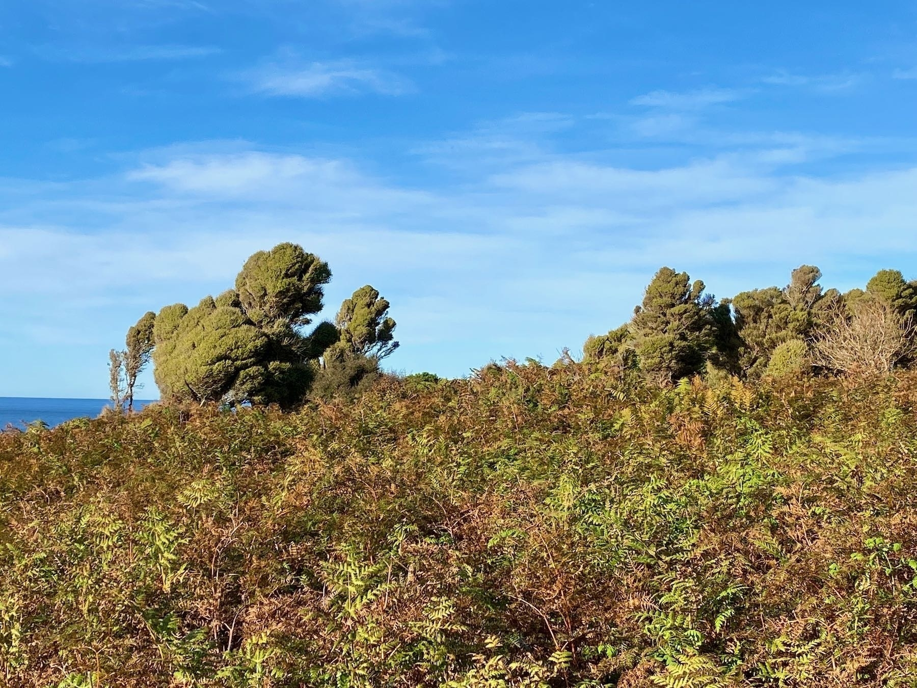 Wind-shaped trees and bracken.