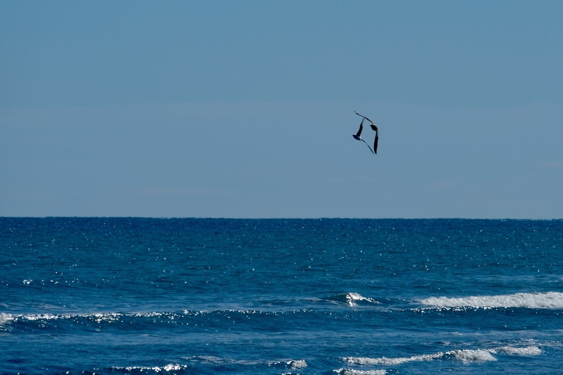 Two gulls flying whose winds seem to form a recnatgle.