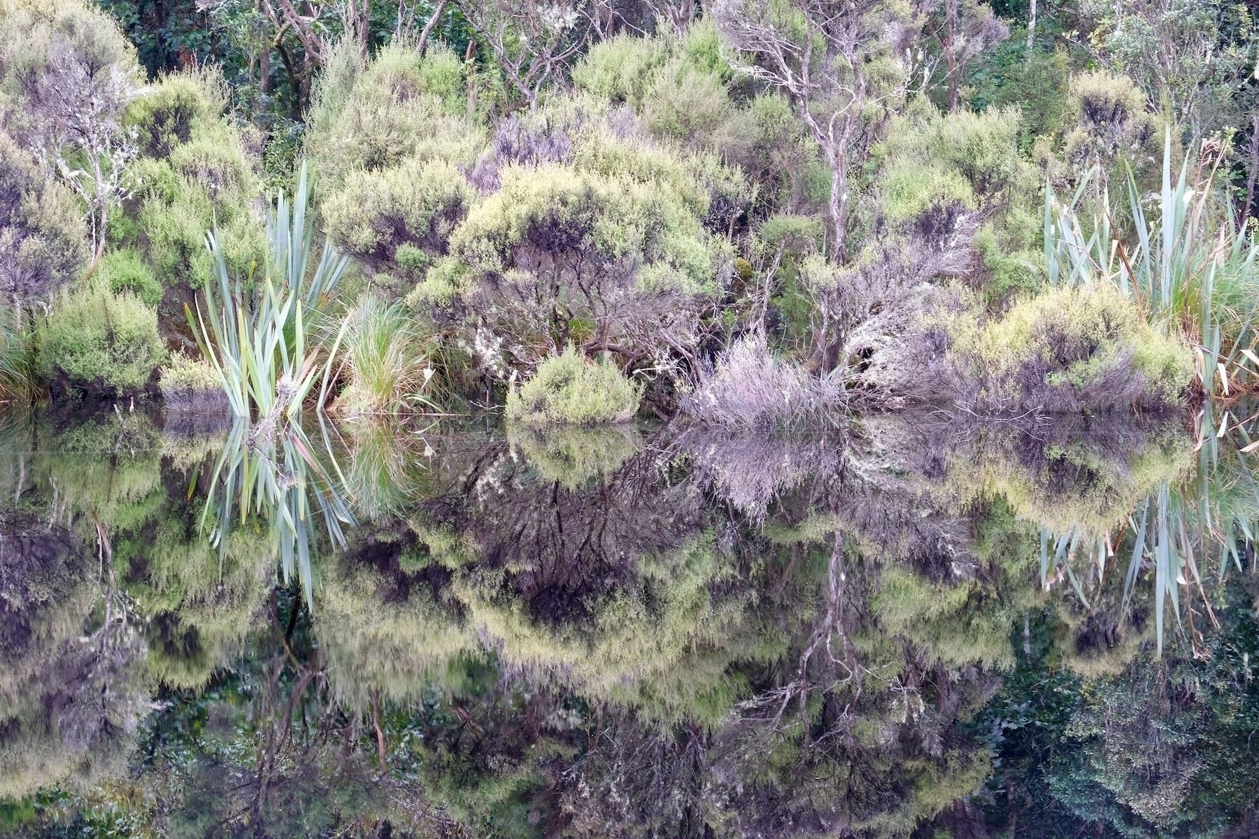 Lake Wilkie reflections.