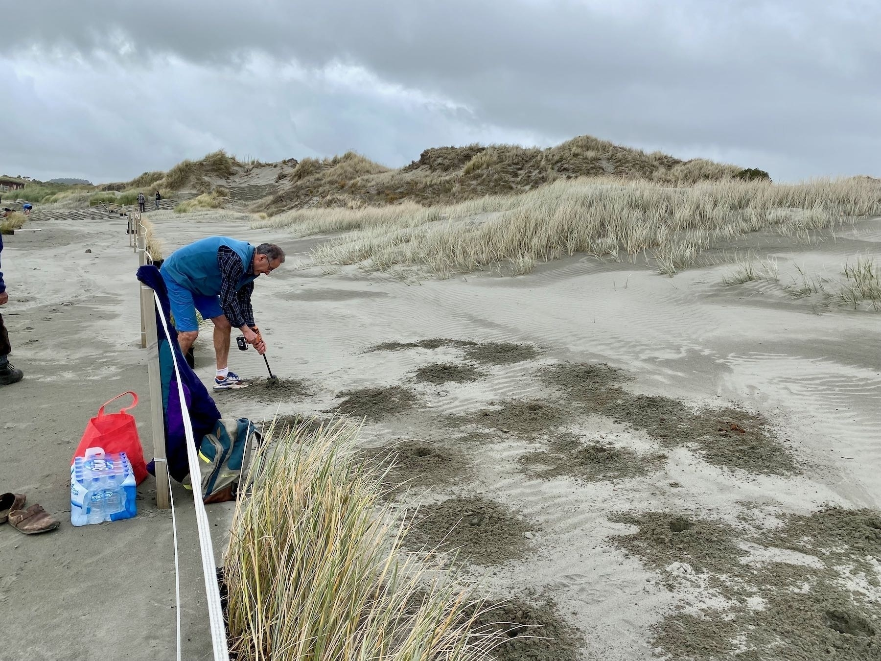 A person drilling planting holes in the sand.