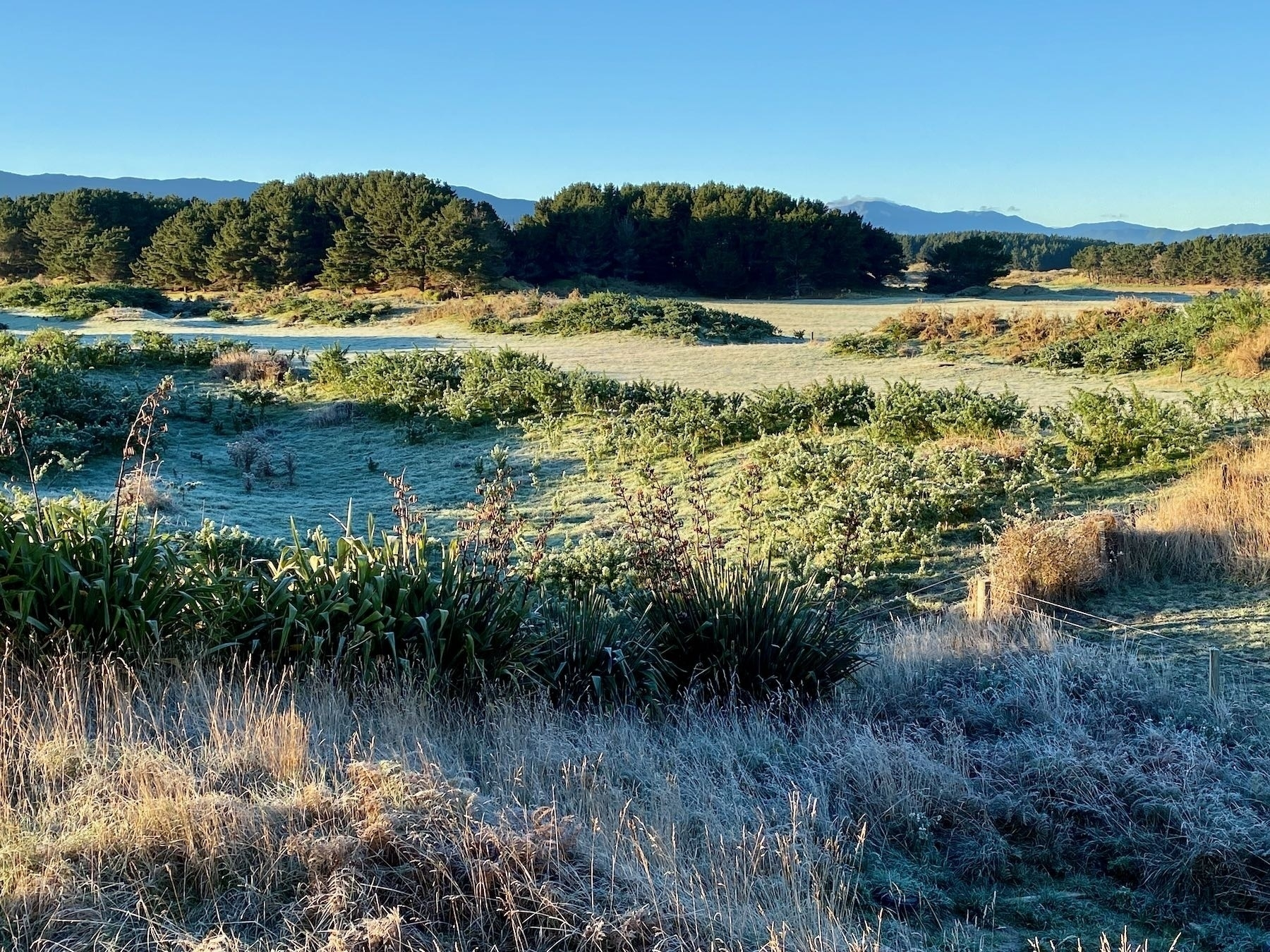 Another paddock with coat of frost.