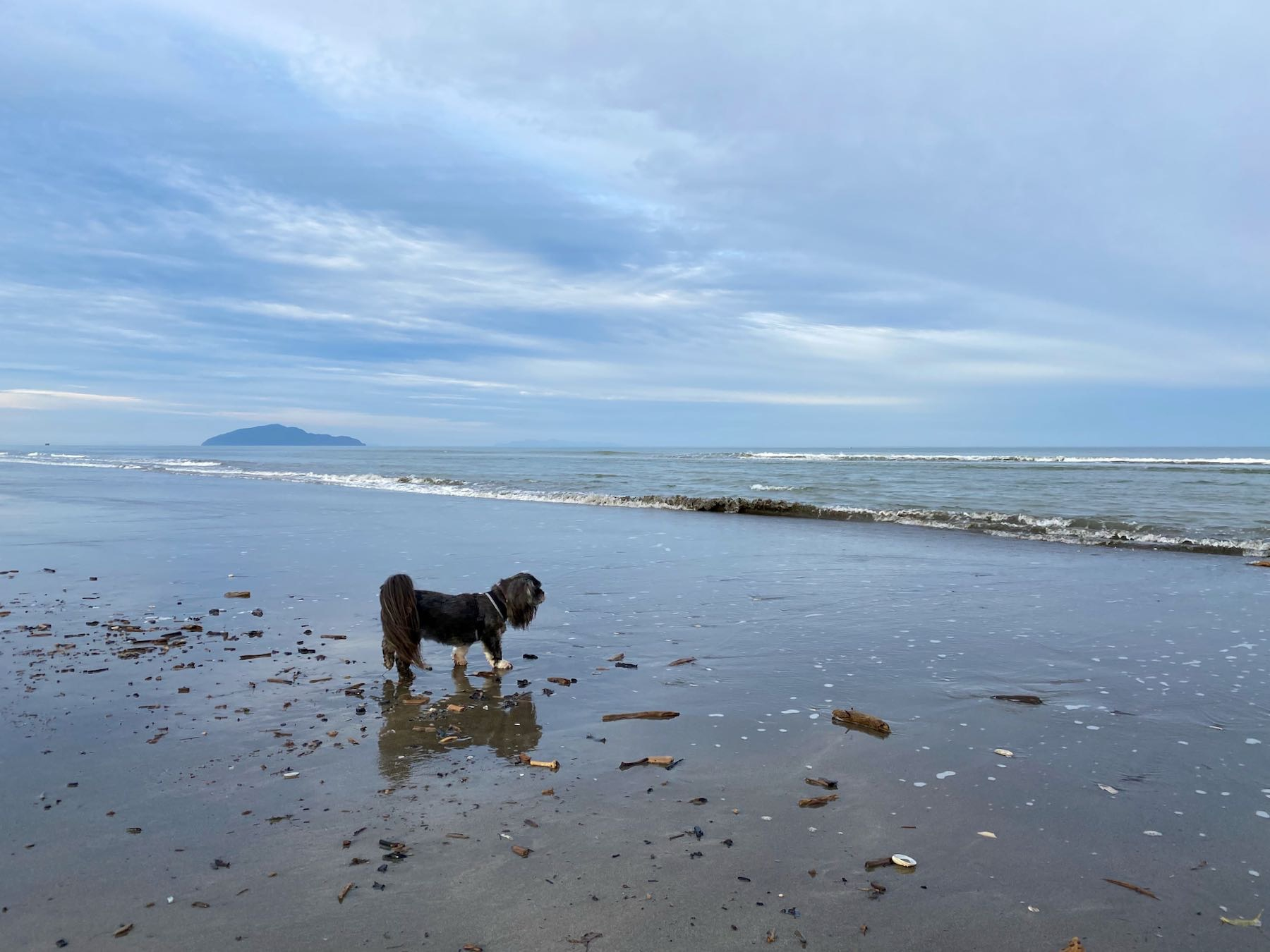 Small black dog reflected in the damp sand at the edge of the sea.