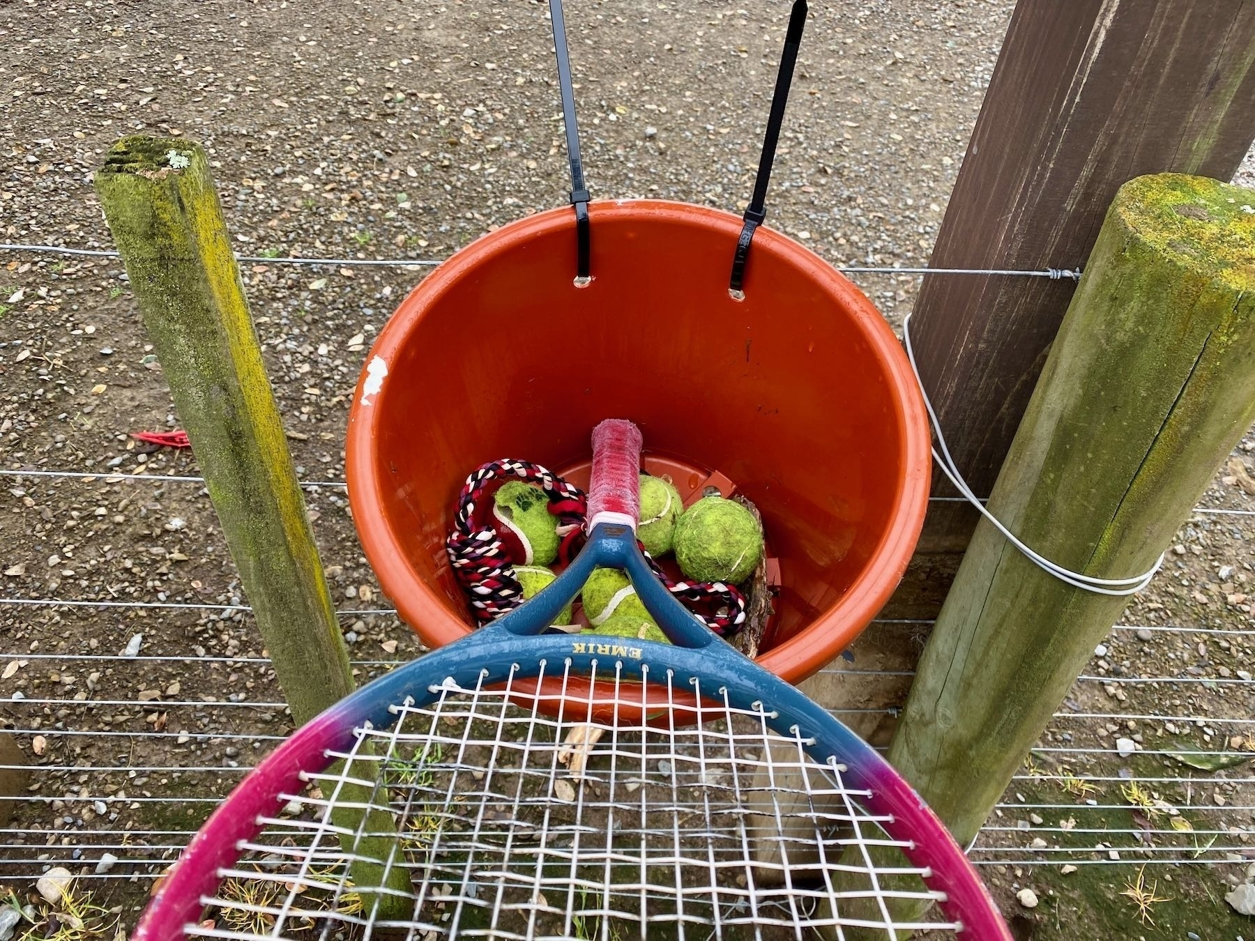 The Good Dog Library bucket also contains tennis balls and tug toys.
