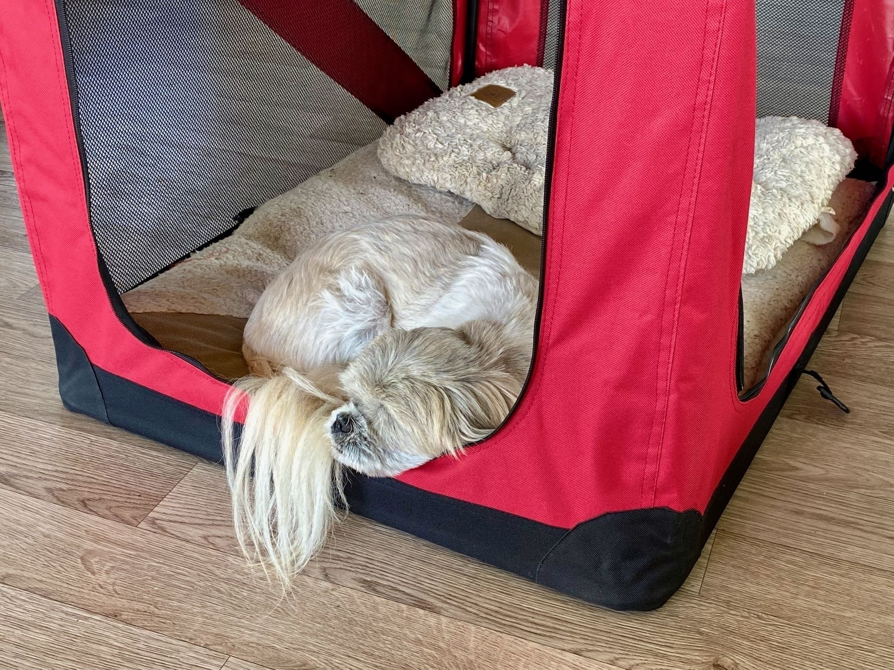 Small white dog sleeping in a soft crate.