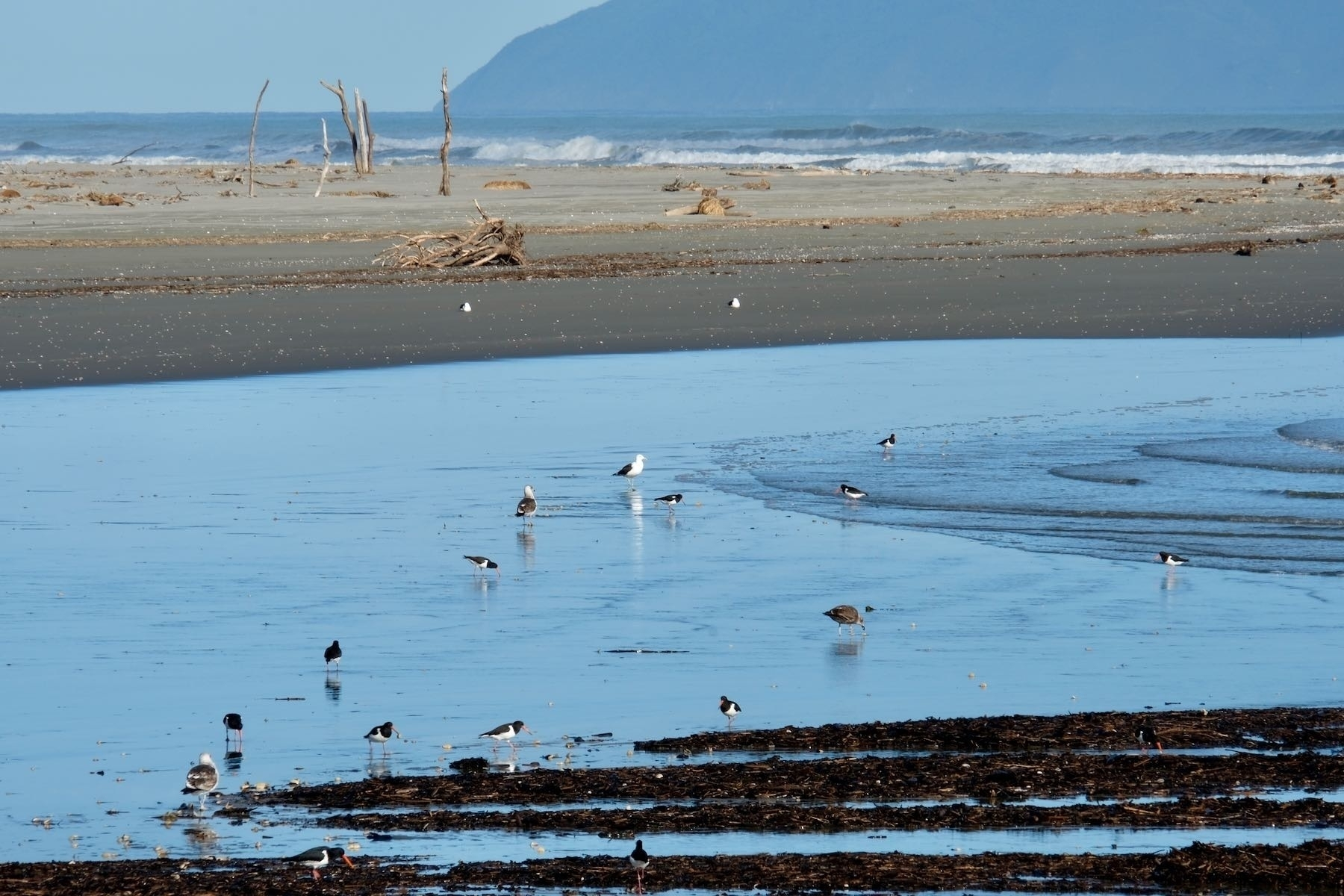 Foreground: birds in water, with sand behind them, then waves in the sea, then a looming island.