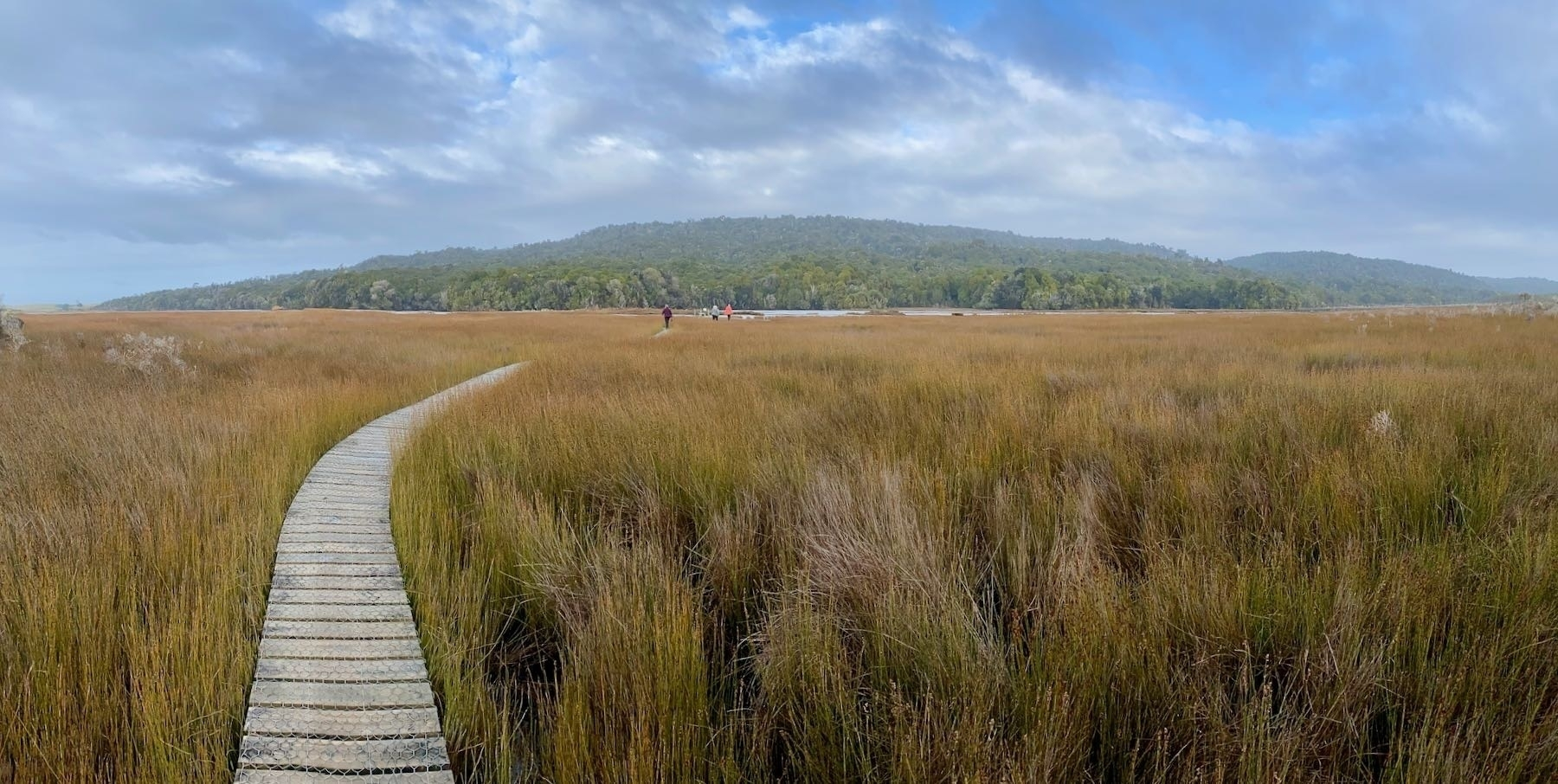 Tautuku Estuary with a broad expanse of golden reeds.