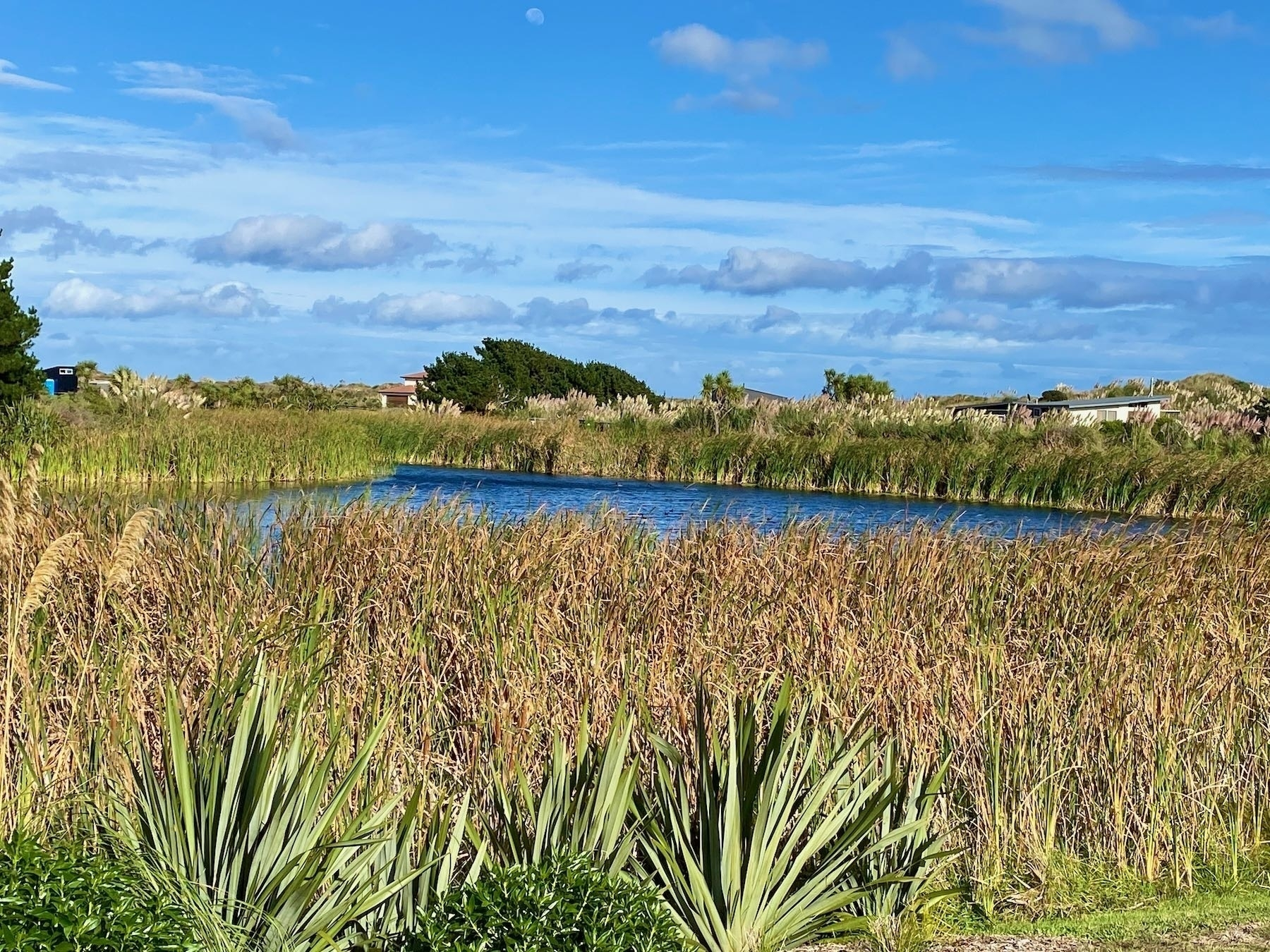 Blue lake surrounded by rushes.