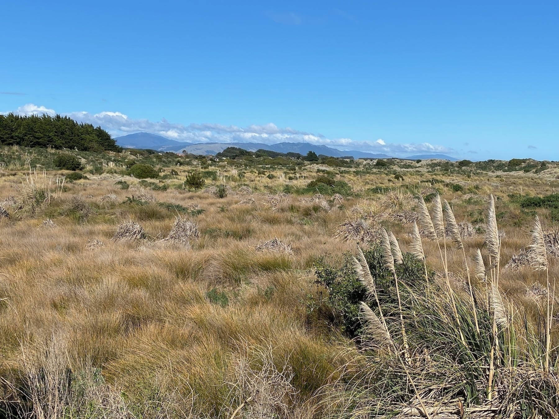 Looking south across grasses and scrub.